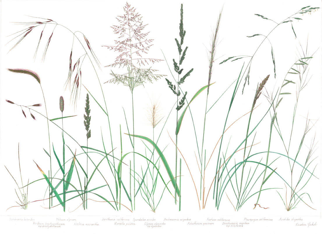 Grass Poster Native 1